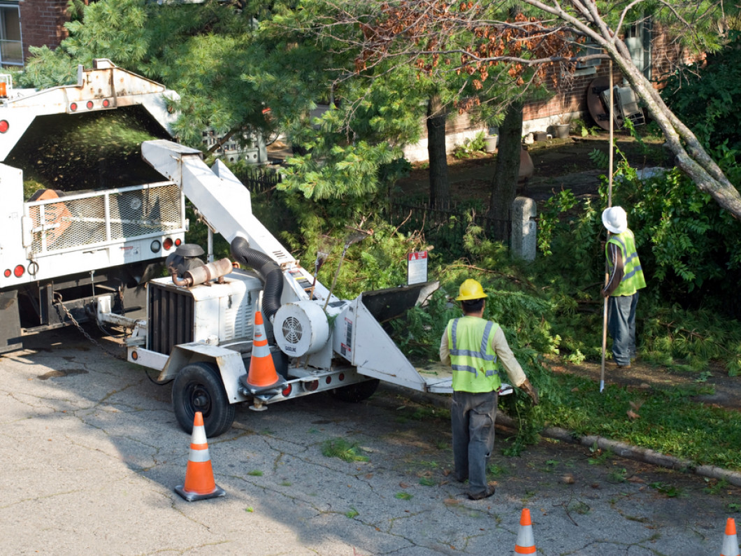 How to Find the Best Local Tree Service